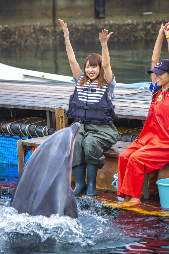 画像3: イルカとのふれあいタイム