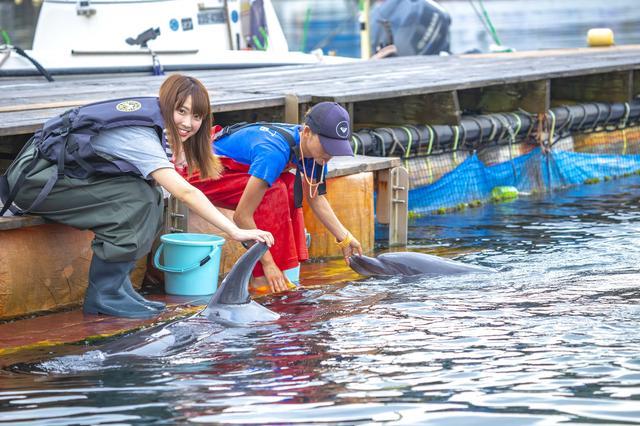 画像1: イルカとのふれあいタイム