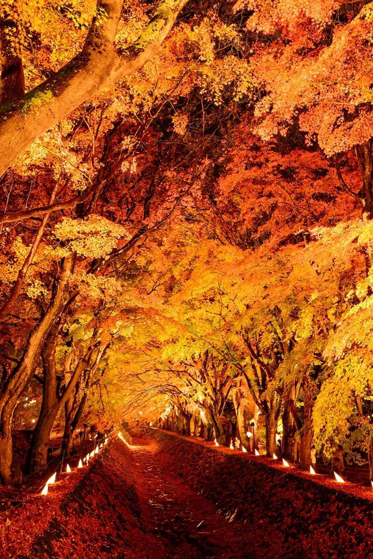 画像: もみじ回廊/FUJIKAWAGUCHIKO 公式サイトより www.fujisan.ne.jp