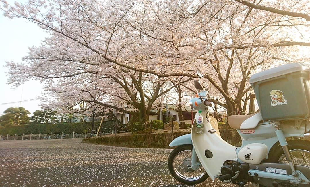 """画像1: かずやはしひろ on Instagram: """"オマケ(愛車と桜) #リトルカブ #桜 #写真 #alittlehonda #相棒と見る景色"""" www.instagram.com"""