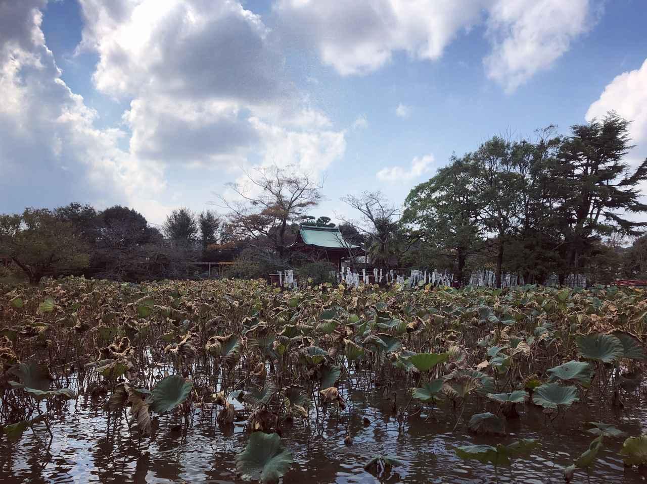 画像4: 鎌倉に到着!