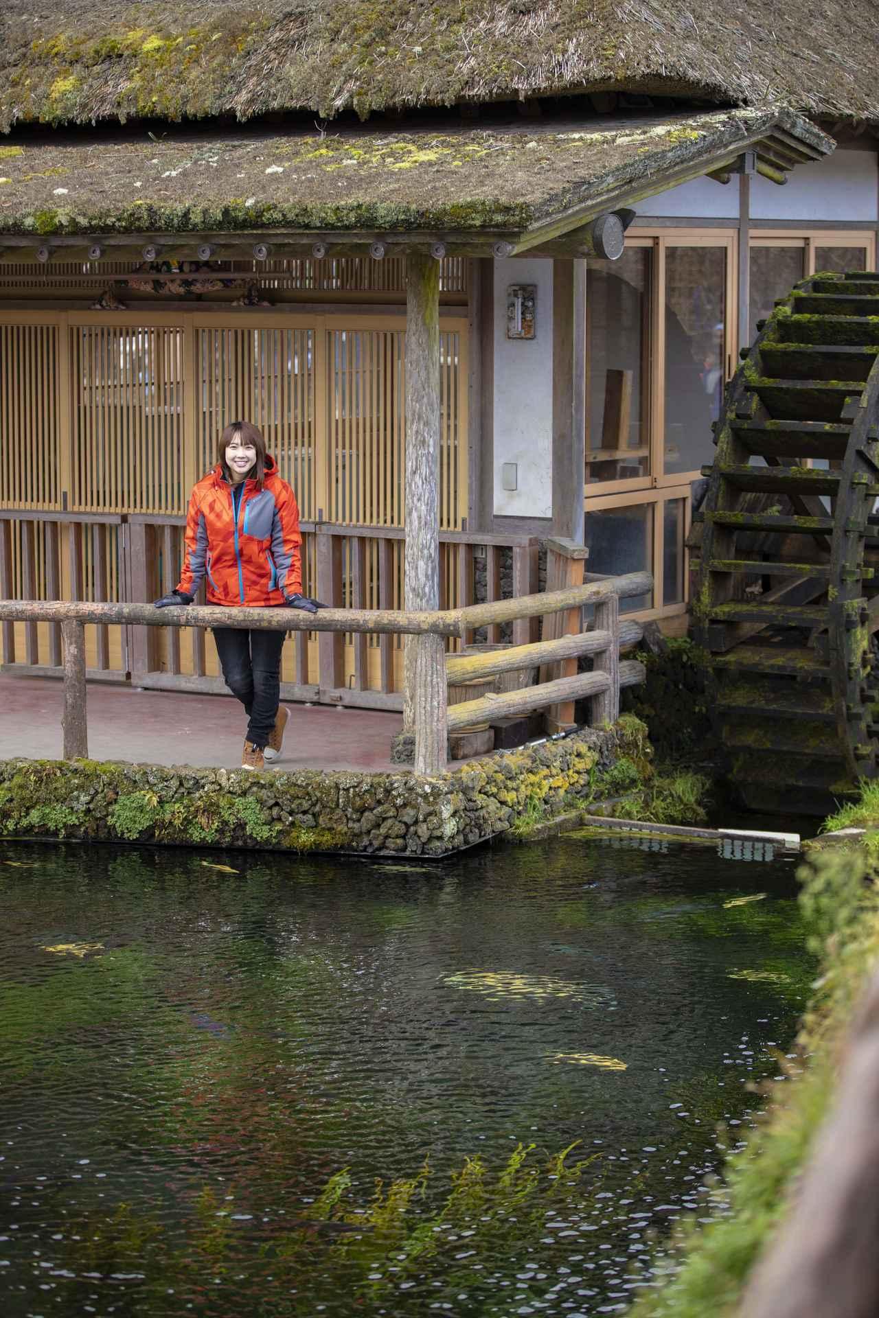 画像3: 続いて向かう先は綺麗な湧水池、忍野八海