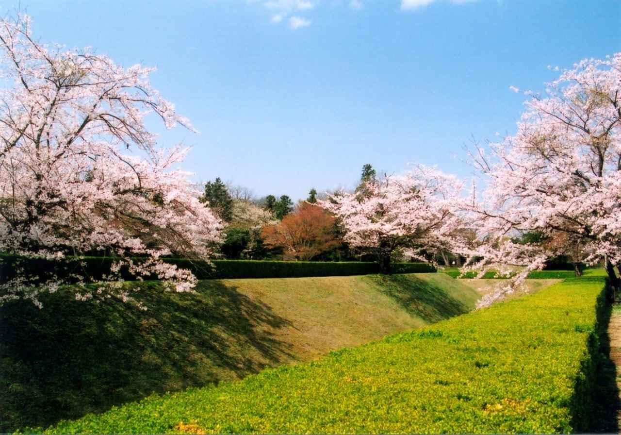 画像: 佐倉城址公園公式サイトより www.city.sakura.lg.jp