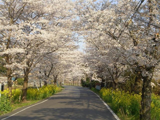 画像: 栃木市観光協会公式サイトより www.tochigi-kankou.or.jp