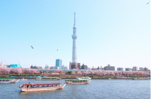 """画像: """"東京スカイツリーと桜""""ってライターUsagiは初めて見た写真です!"""