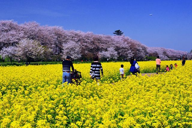画像: 桜まつり | 幸手市観光協会