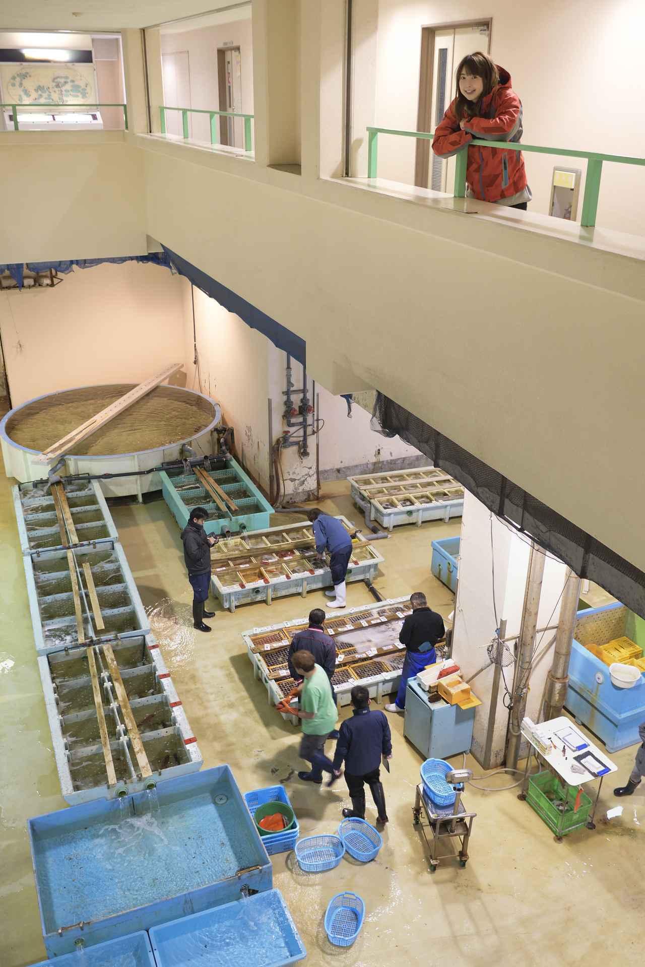 画像1: 今回のスタート地点は三崎「魚市場食堂」です!