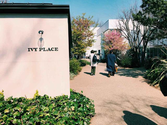 画像1: IVY PLACE