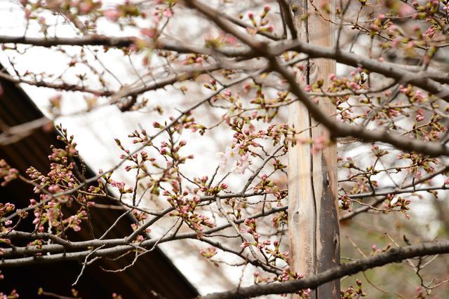 画像2: 靖國神社公式サイトより www.yasukuni.or.jp