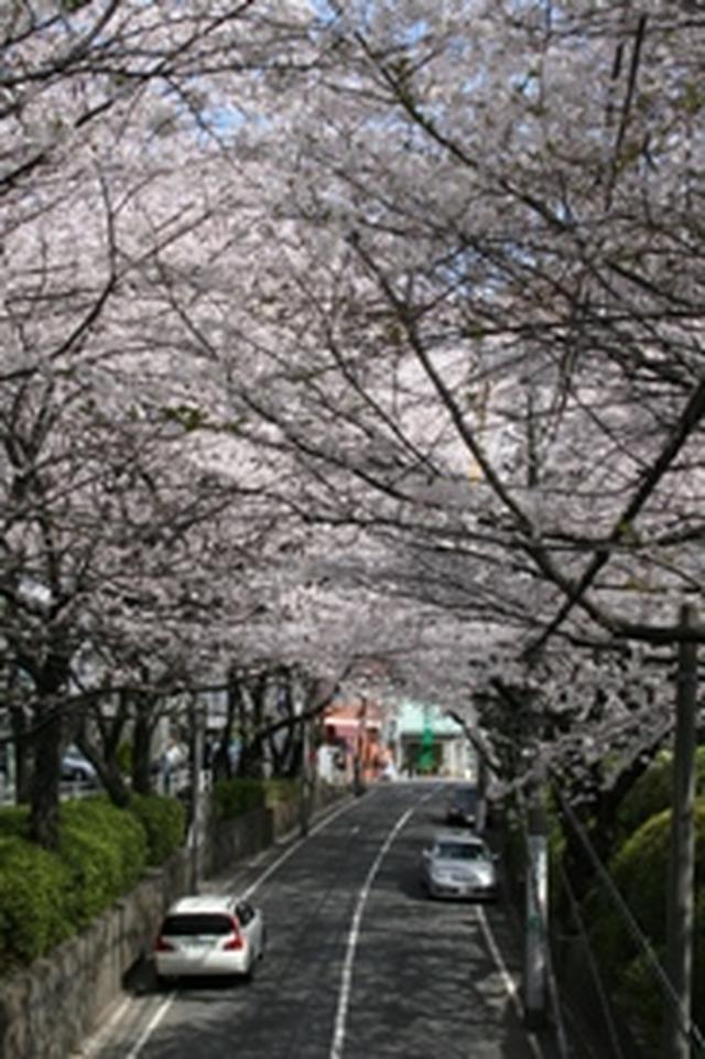 画像2: 大田区公式サイトより www.city.ota.tokyo.jp