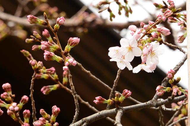 画像1: 靖國神社公式サイトより www.yasukuni.or.jp