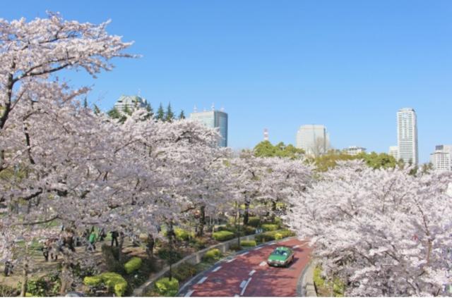 画像1: 今すぐ行ける!都内の桜ツーリング4選♩