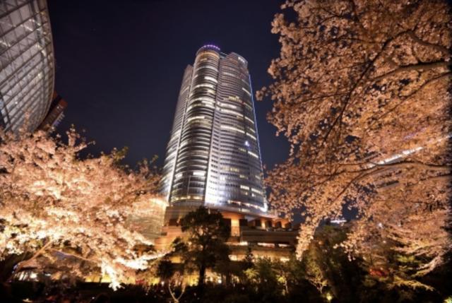 画像2: 今すぐ行ける!都内の桜ツーリング4選♩
