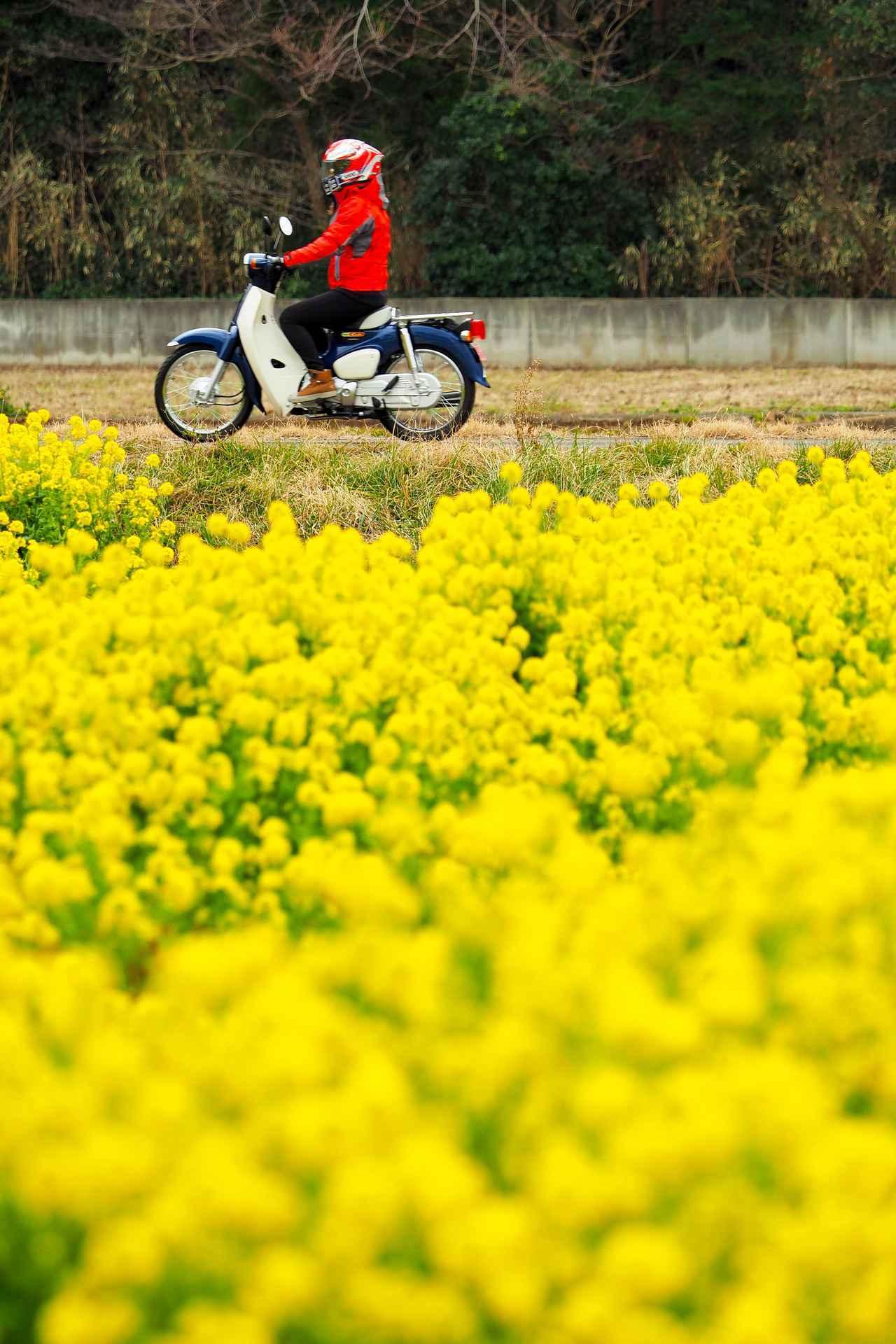 画像6: 菜の花畑を見に煌めきの丘へむかいます!
