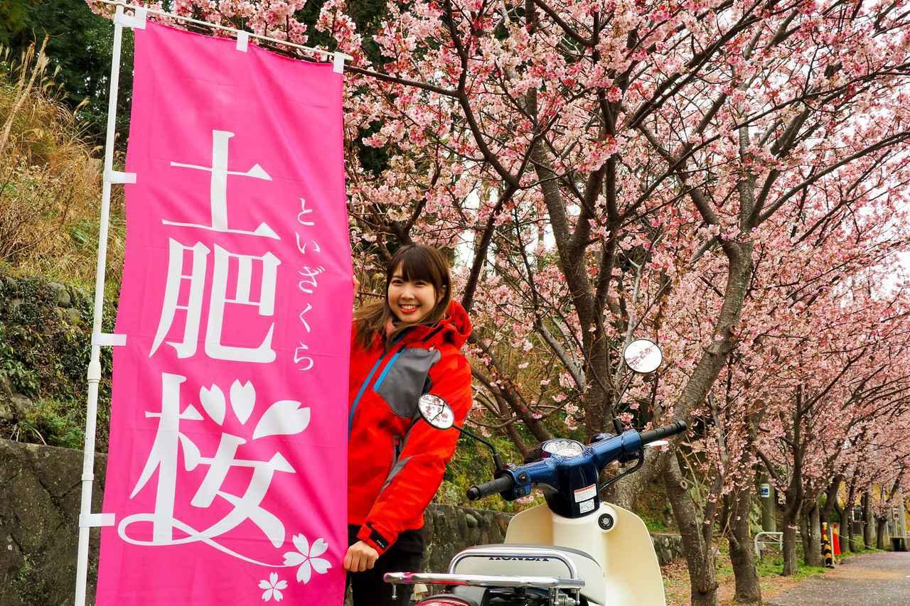 画像3: 道中で偶然桜が綺麗なポイントに出会いました!