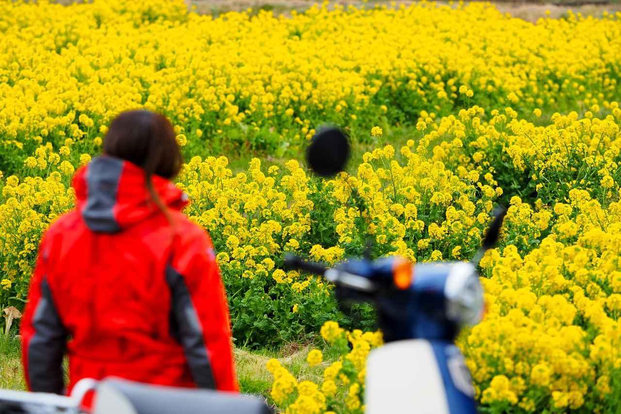画像3: 菜の花畑を見に煌めきの丘へむかいます!