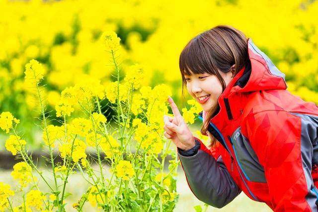 画像4: 菜の花畑を見に煌めきの丘へむかいます!