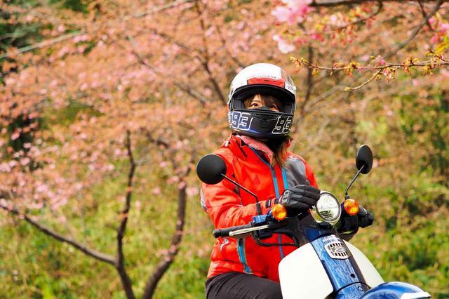 画像1: 道中で偶然桜が綺麗なポイントに出会いました!