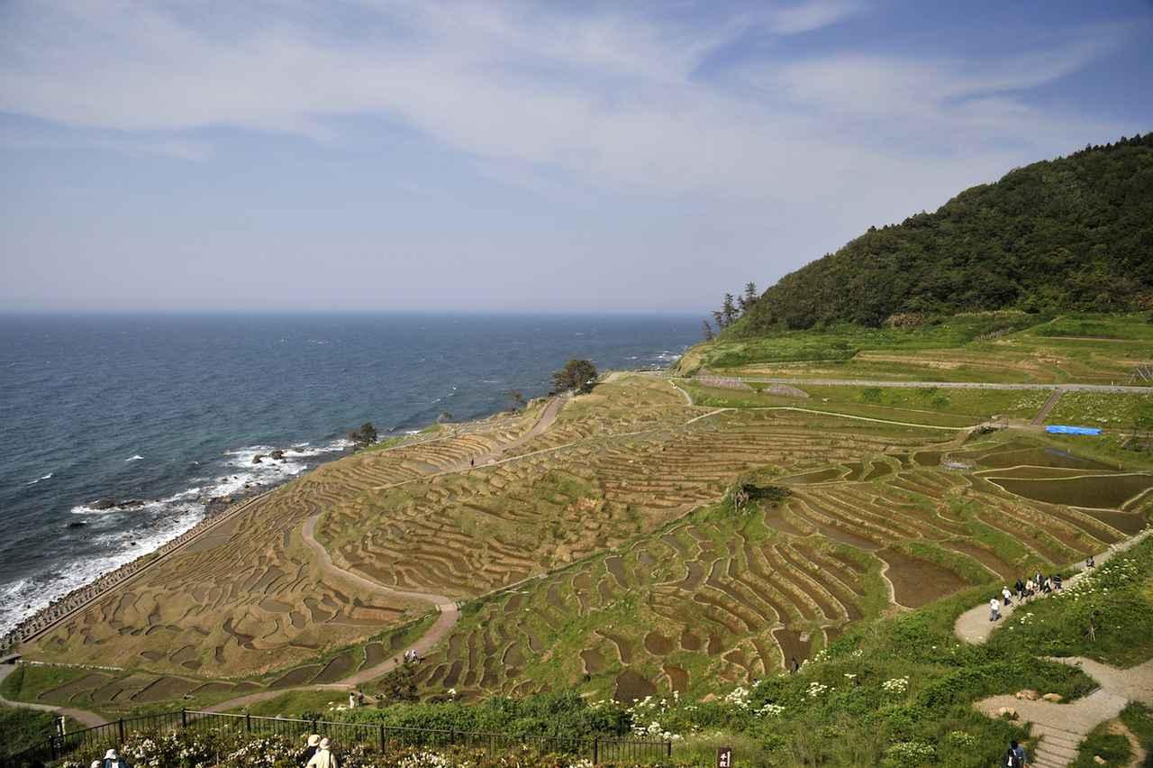 画像: 日本海に面した棚田「白米(しらよね)千枚田」。奥能登を象徴する観光スポットのひとつです。広々としたエリアに小さく区分けされた棚田の区画は1000を超えるもの。もしも夏に訪れたなら、青々とした稲が一面を埋め尽くす絶景が拝めることでしょう。