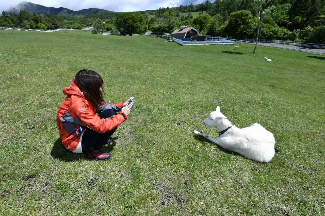 画像4: まきば公園で動物と触れ合い!