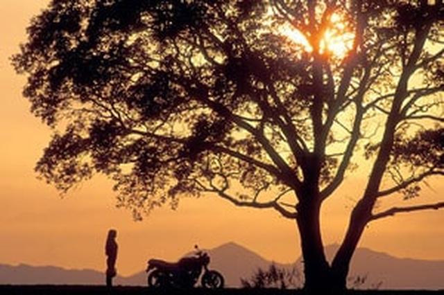 画像: 地平線を画面ぎりぎりまで下にすることで、陽が強調されてバイクや木のシルエットが美しく表現される www.honda.co.jp