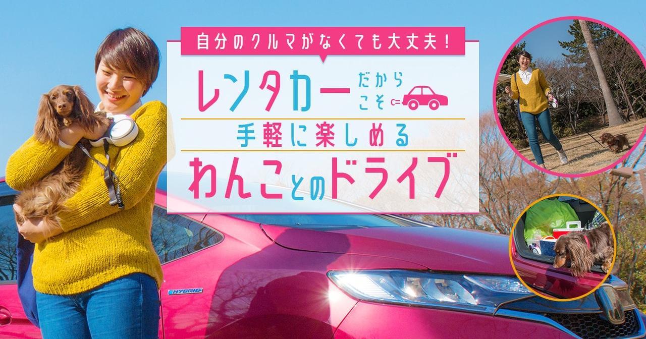 画像: 自分のクルマがなくても大丈夫!レンタカーだからこそ手軽に楽しめるわんことのドライブ  特集   おでかけ情報   Honda Dog