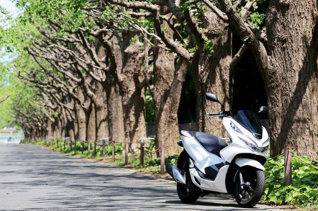 画像1: 2日で取れるバイク免許「原付二種」とは?! オススメ車両も解説 - A Little Honda