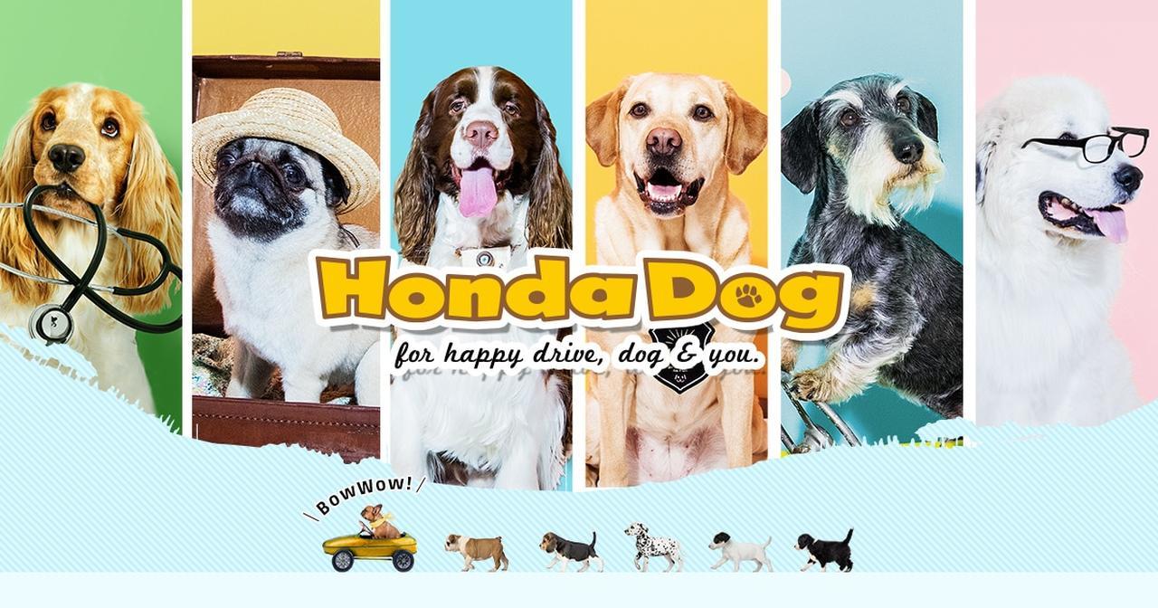 画像: わんこにやさしいクルマ | Honda Dog