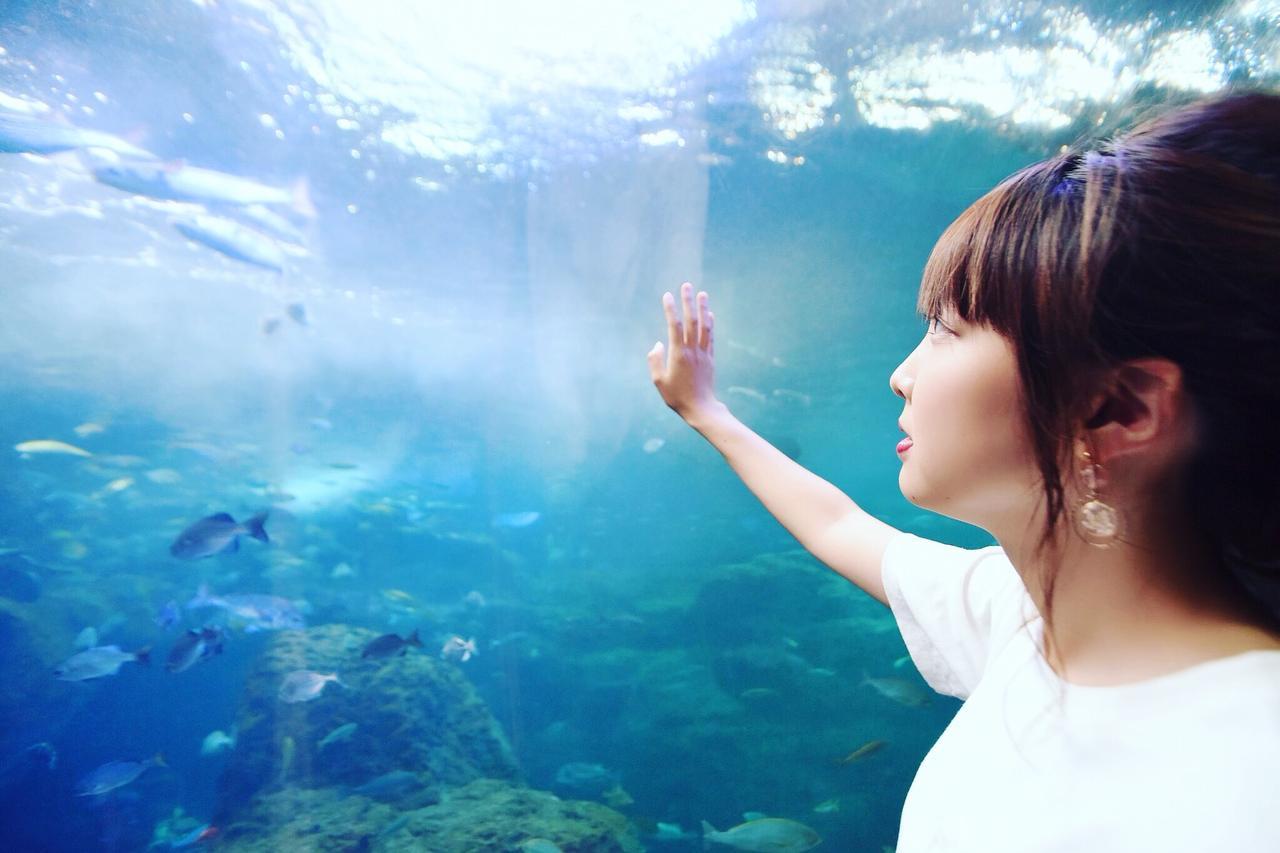 画像3: やってきたのは……新江ノ島水族館!