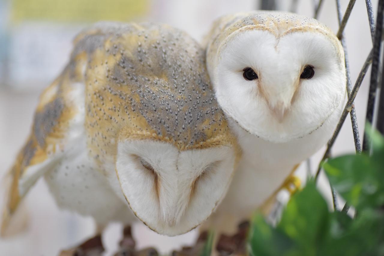 画像4: 池袋のフクロウに会いに行こう!