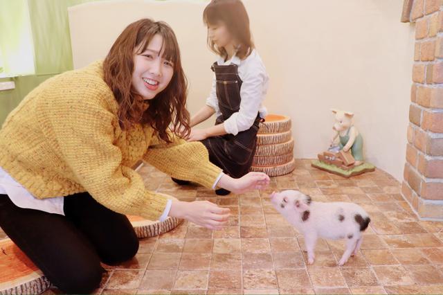 画像4: かわいいマイクロブタちゃんとの出会いに感激!