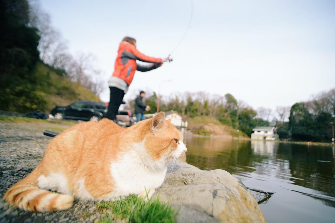 画像: 猫ちゃんも見守ってくれています……⁉︎