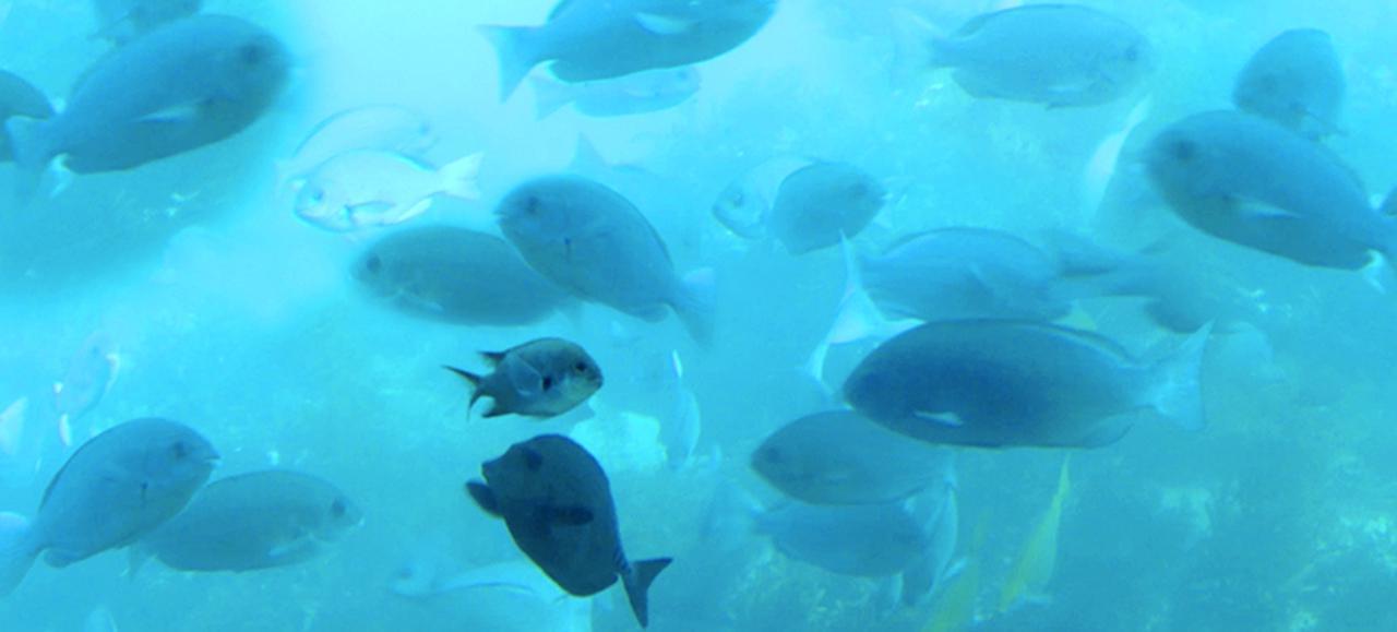 画像: www.katsuura.org