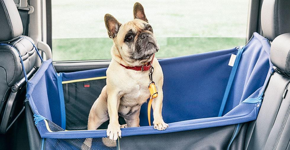 画像: 愛犬と一緒にクルマ選びに行けるディーラーはここだ! - A Little Honda | ア・リトル・ホンダ(リトホン)