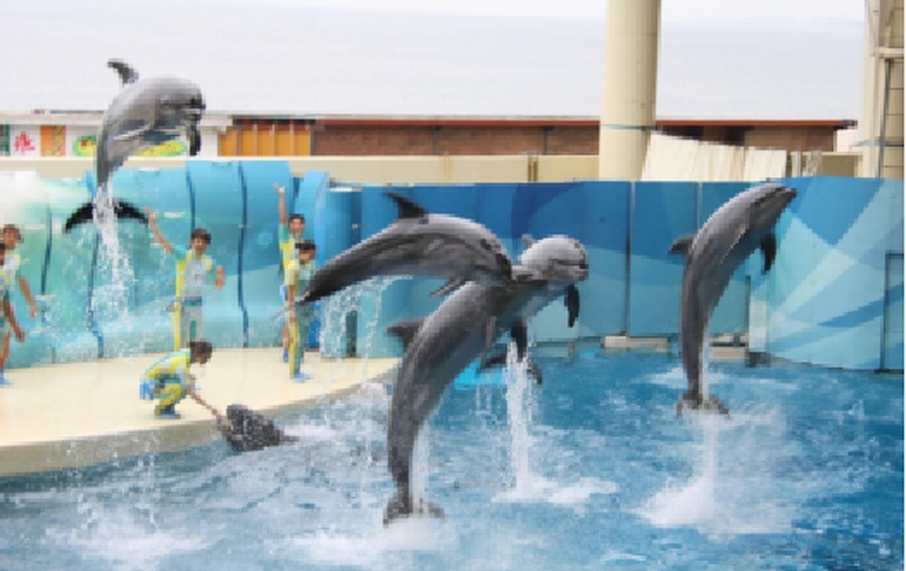 画像: 江ノ島水族館
