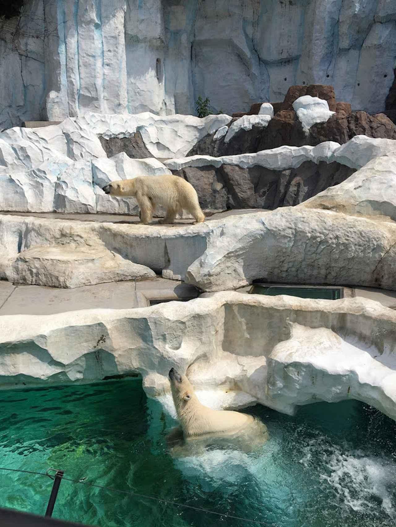 画像: 上野動物園にいってきました♪