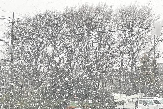 画像: 都内は久々の雪!!!