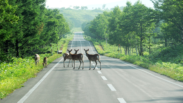 画像: 北海道の車中泊旅は、野生動物に出合える楽しみも。