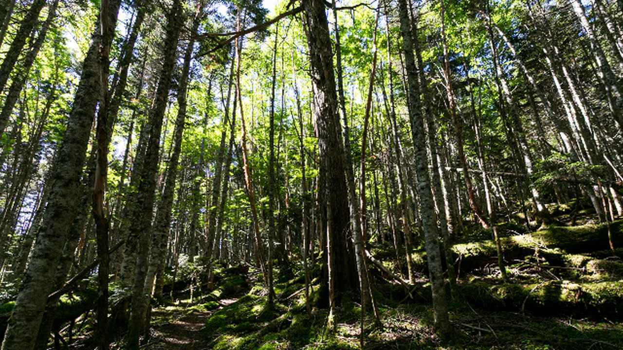 画像7: 最高の景色が待っている!山岳写真家おすすめの「テント泊縦走コース」4選