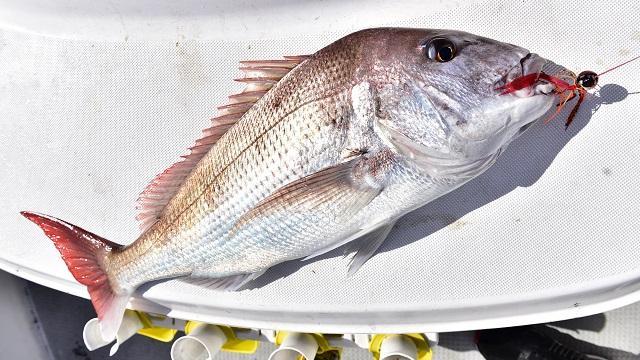 画像: ◇タイラバの釣期とエリア