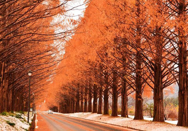 画像: いつでも絶景!メタセコイア並木 | びわ湖高島観光ガイド