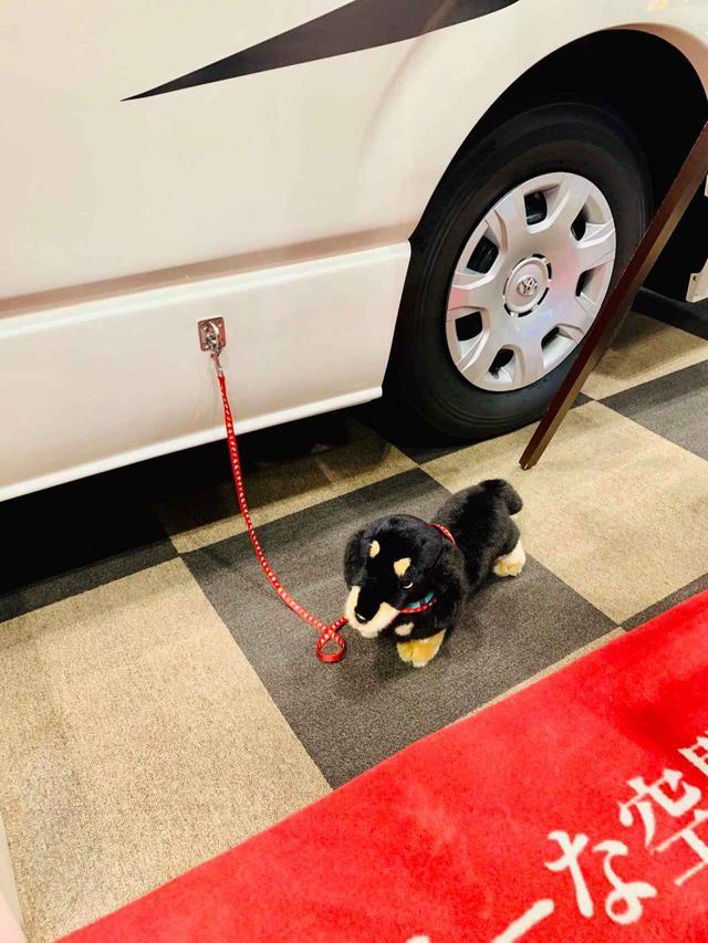 画像4: RVトラスト「TR500 C-LH ペット仕様」 愛犬と一緒にクルマ旅へ!