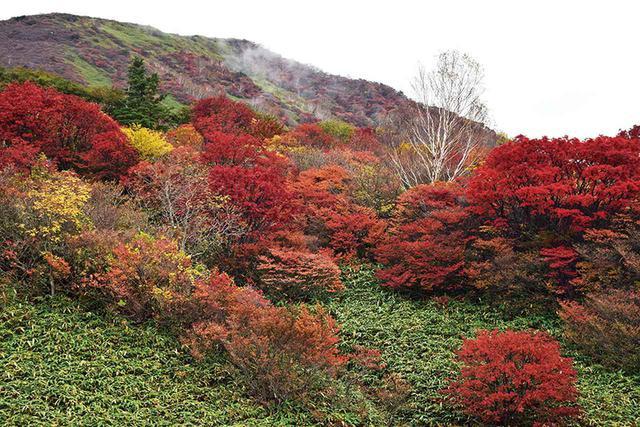 画像: 10月初旬から色づく那須の茶臼山。