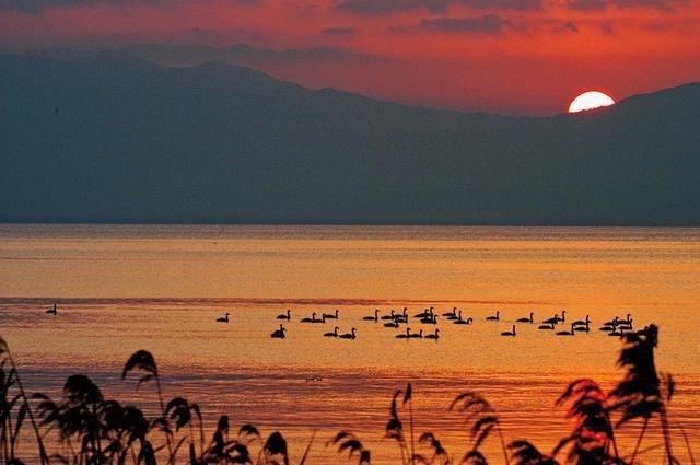 画像: 道の駅の前から撮影した琵琶湖の夕陽とコハクチョウ。この時間帯になると、ほとんど湖上にはいなくなる。