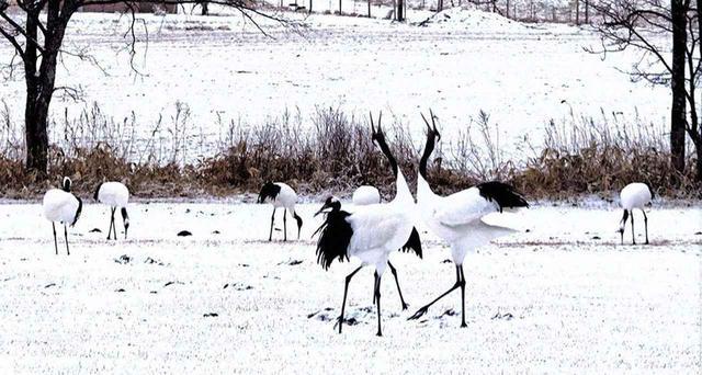 画像: 厳冬期の北海道標茶町で過ごしたからわかる車中泊旅の注意点