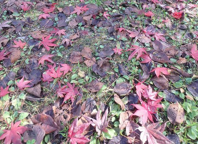 画像: ①落ち葉など燃えやすいものは避けておく