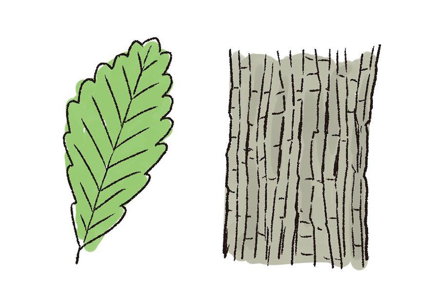 画像2: 薪選びのコツ