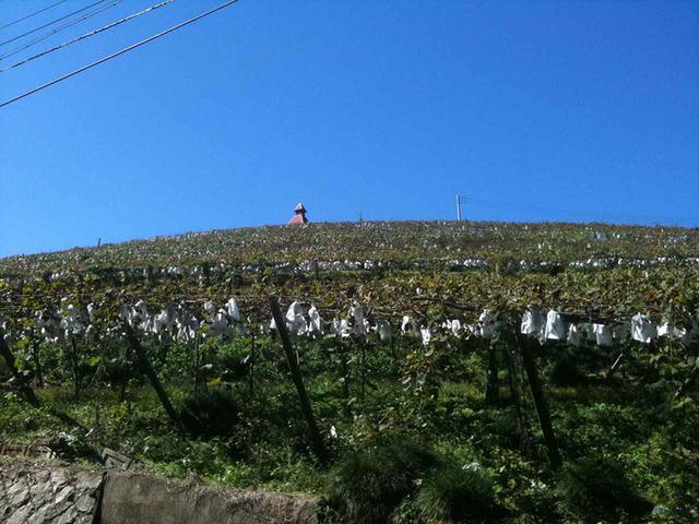画像2: ワインでカンパイ! お花見も!「RVパーク甲州市勝沼ぶどうの丘」とは