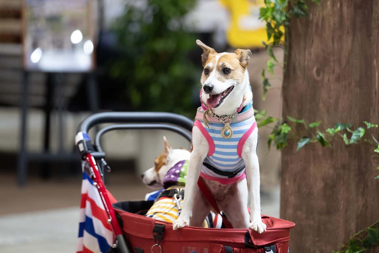 画像: ペットの同伴もOK。愛犬と楽しもう!