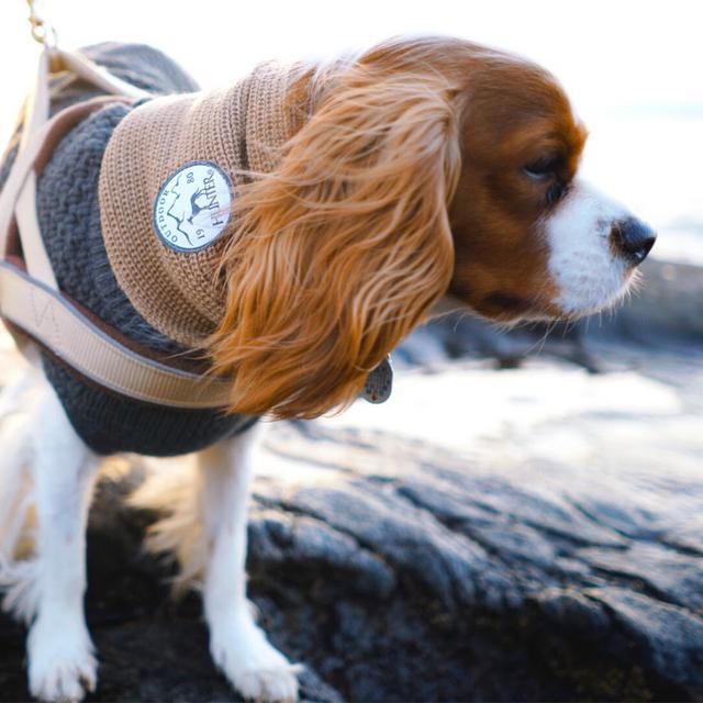 画像: 海辺と犬と、ハイエース。 by INUTABI